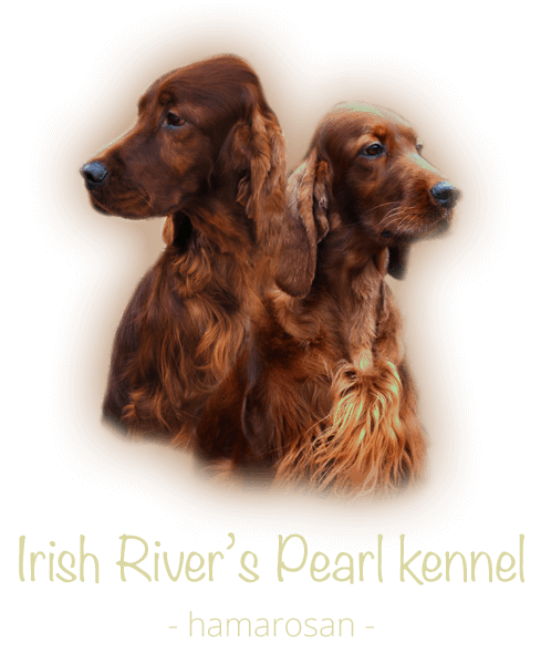 Irish River's Pearl kennel