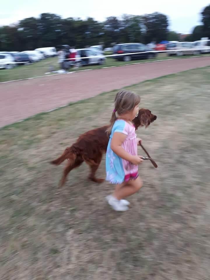 Maja ír szetterrel fut