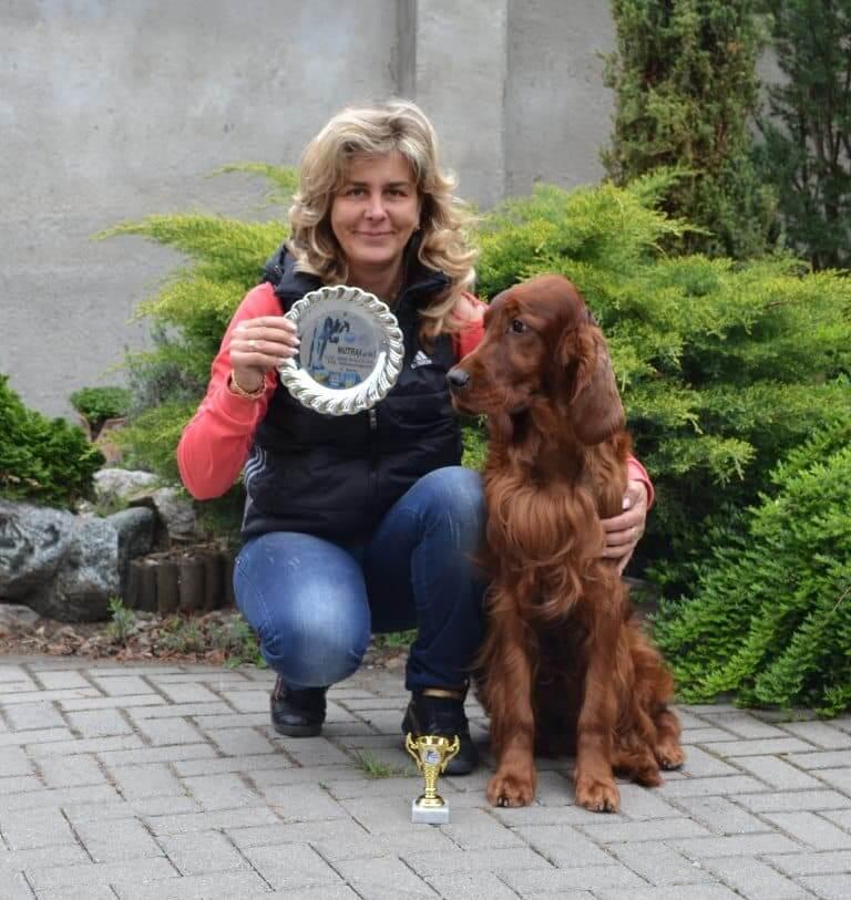 Glady - 2 éves ír szetter kan kutyakiállításon