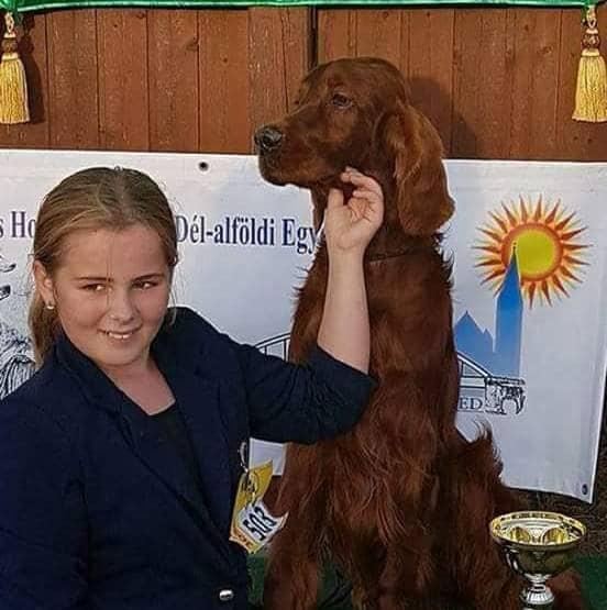 Glady - 7 és fél éves ír szetter kan - Bogival