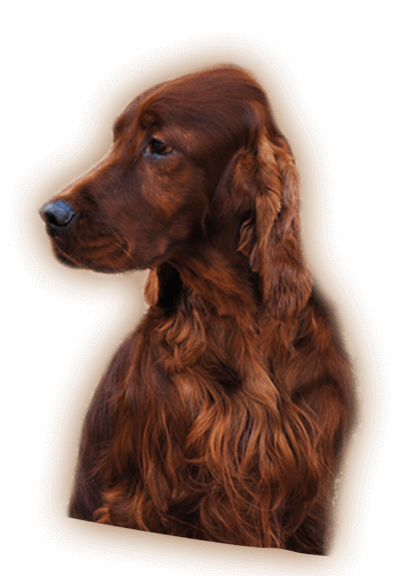 slider-dog1