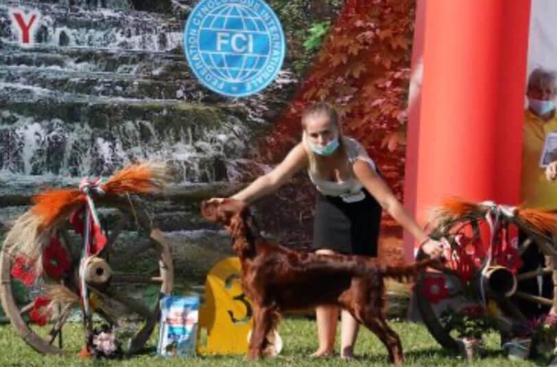 Irish River's Pearl Honey Pretty Woman - Kölyök BIS 3 - Szilvásvárad